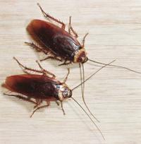 - Люди думают что они хозяева этого мира,тараканы смотрят и смеются...